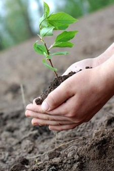 The Council is planting trees to help reduce net greenhouse gas emissions